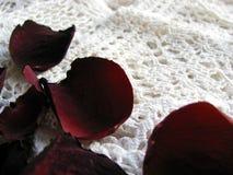 Laço do vintage com as pétalas cor-de-rosa secas imagem de stock