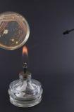 Laço microbiológico encarnado na chama do queimador no prato de petri Foto de Stock Royalty Free