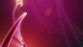 Laço sem emenda de giro do ADN video estoque