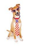 Laço vestindo e vidros do cão americano patriótico imagens de stock royalty free