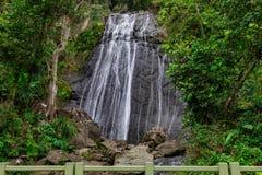La古柯瀑布在El Yunque森林里 免版税库存图片