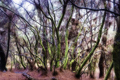La毛发palma的森林el 库存图片