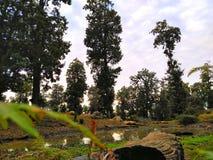 La自然jijel阿尔及利亚 免版税库存照片