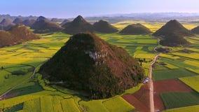 La órbita aérea del abejón tiró del campo de flor amarillo de la rabina, Luoping, China metrajes