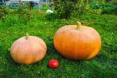 la Aún-vida de calabazas y del tomate clasificó las calabazas frescas y a Imágenes de archivo libres de regalías