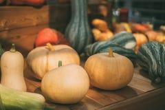 la Aún-vida de haloween las calabazas Foto de archivo libre de regalías