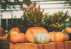 la Aún-vida de haloween las calabazas Fotos de archivo libres de regalías