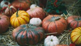 la Aún-vida de haloween las calabazas Fotografía de archivo