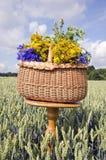 La aún-vida del pleno verano con la cesta y las hierbas médicas florece Foto de archivo libre de regalías