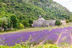 La abadía de Senanque y de la floración rema las flores de la lavanda Foto de archivo libre de regalías