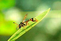 La abeja Fotos de archivo