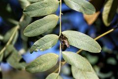 La abeja Fotografía de archivo