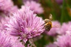 La abeja Foto de archivo