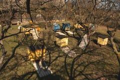 La abeja amarilla y azul encorcha del top Foto de archivo libre de regalías