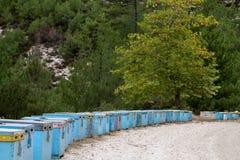 La abeja azul encorcha en el campo en Thassos Imagenes de archivo