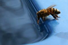 La abeja bebe el agua Foto de archivo libre de regalías
