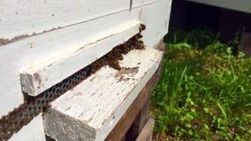 La abeja coa alas vuela lentamente a la colmena para recoger el néctar en el colmenar privado de las flores vivas almacen de metraje de vídeo