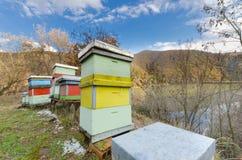 La abeja de la miel encorcha la caja. Foto de archivo libre de regalías