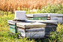 La abeja de la miel jerarquiza el campo Foto de archivo