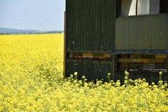 La abeja del colmenar en un campo de la violación Imágenes de archivo libres de regalías
