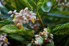 La abeja en flores blancas amarillas hermosas con verde se va en el parque Fotografía de archivo