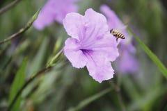 La abeja en las flores, encuentra el dulce, el la primavera con los fondos de la falta de definición Fotografía de archivo libre de regalías