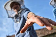 La abeja en su mano pica al apicultor Foto de archivo libre de regalías