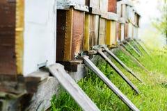 La abeja encorcha al aire libre Foto de archivo libre de regalías