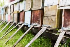 La abeja encorcha al aire libre Imagen de archivo