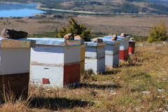 La abeja encorcha (Croatia) Foto de archivo