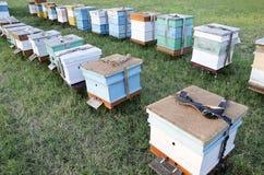 La abeja encorcha en el colmenar en el campo Fotografía de archivo libre de regalías