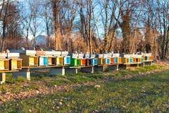 La abeja encorcha para colocarse de lado a lado en el campo en Italia septentrional Imagen de archivo libre de regalías
