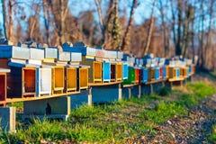 La abeja encorcha para colocarse de lado a lado en el campo en Italia septentrional Fotografía de archivo libre de regalías
