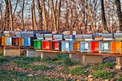 La abeja encorcha para colocarse de lado a lado en el campo en Italia septentrional Foto de archivo