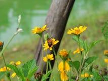 La abeja está chupando el néctar Fotos de archivo