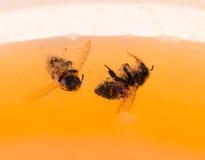 La abeja está flotando en miel anaranjada Imagen de archivo