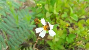 La abeja está recogiendo el polen en la flor y la mosca lejos, 4k almacen de metraje de vídeo