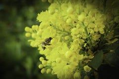La abeja está trabajando Fotos de archivo libres de regalías
