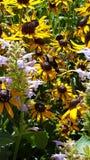 La abeja más fresca Imagen de archivo