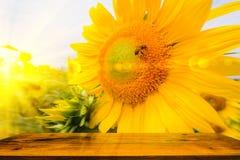 La abeja que se sienta en el girasol con con la tabla de madera Imagen de archivo libre de regalías