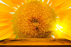 La abeja que se sienta en el girasol Foco selectivo y suave con efecto de la llamarada de la subida de Sun Foto de archivo libre de regalías