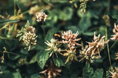 la abeja recoge el polen de la torta sin días libres y días de fiesta Imagen de archivo libre de regalías
