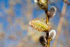 La abeja recoge el polen en el árbol floreciente Imagenes de archivo