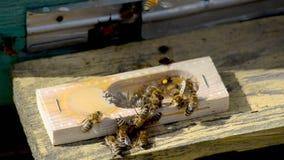 La abeja-reina metrajes