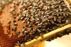 La abeja reina es rodeada siempre por los trabajadores Imagen de archivo