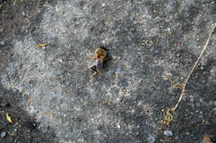 La abeja se arrastra en la losa de piedra Imágenes de archivo libres de regalías