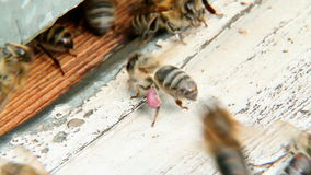 La abeja se sienta en la colmena 2 almacen de metraje de vídeo