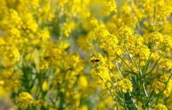 La abeja se sienta en una flor Imagen de archivo