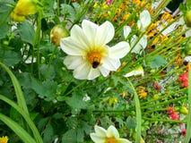 La abeja se sienta en una flor Fotografía de archivo