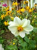 La abeja se sienta en una flor Imagenes de archivo
